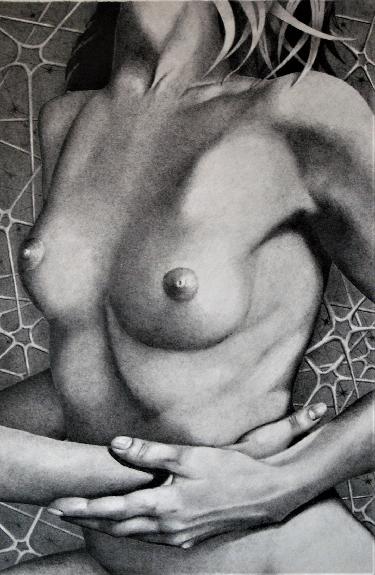 John Rothschild - WINDOWS 020